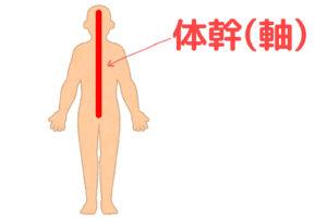 体幹の説明イラスト