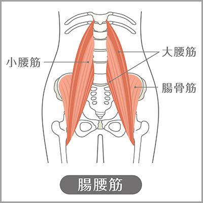 腸腰筋の場所を説明している図